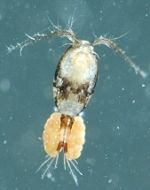 British Freshwater Copepoda, Vols 1 - 3 (Download)