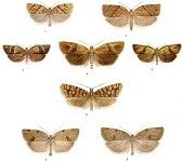 British Tortricoid Moths, Vols I & II (Download)