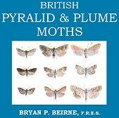 British Pyralid & Plume Moths