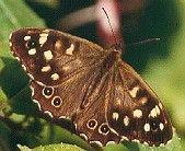 The Genitalia of the Rhopalocera / Larger British Moths (Download)